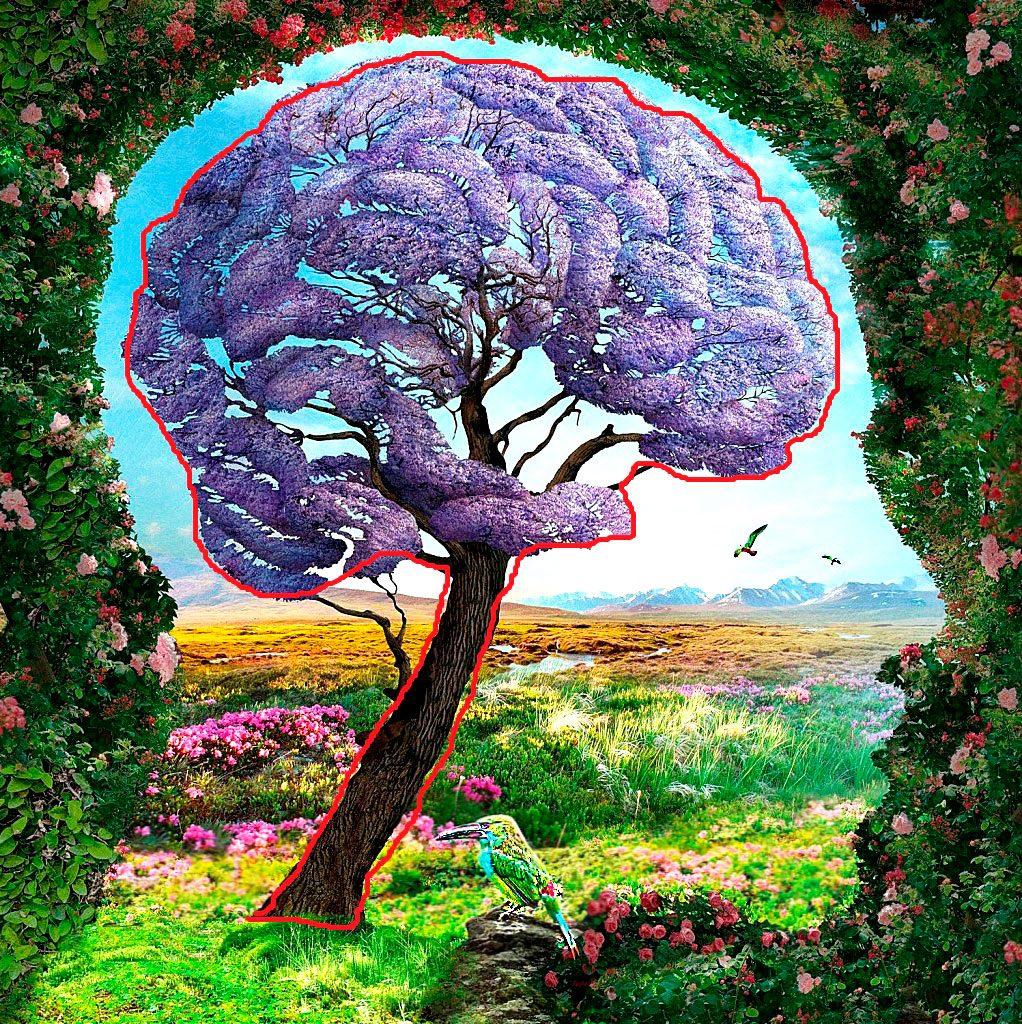 Черепно мозговая травма и Нейропорт